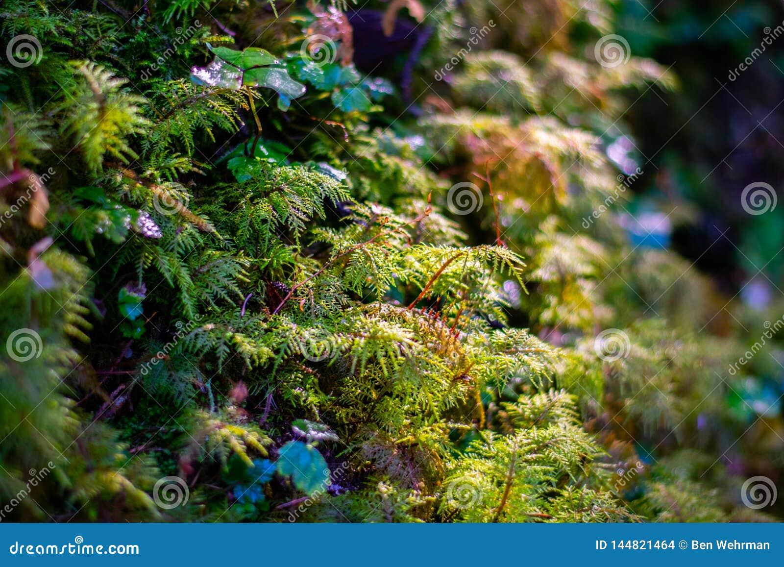 Fougères de bébé dans la forêt tropicale