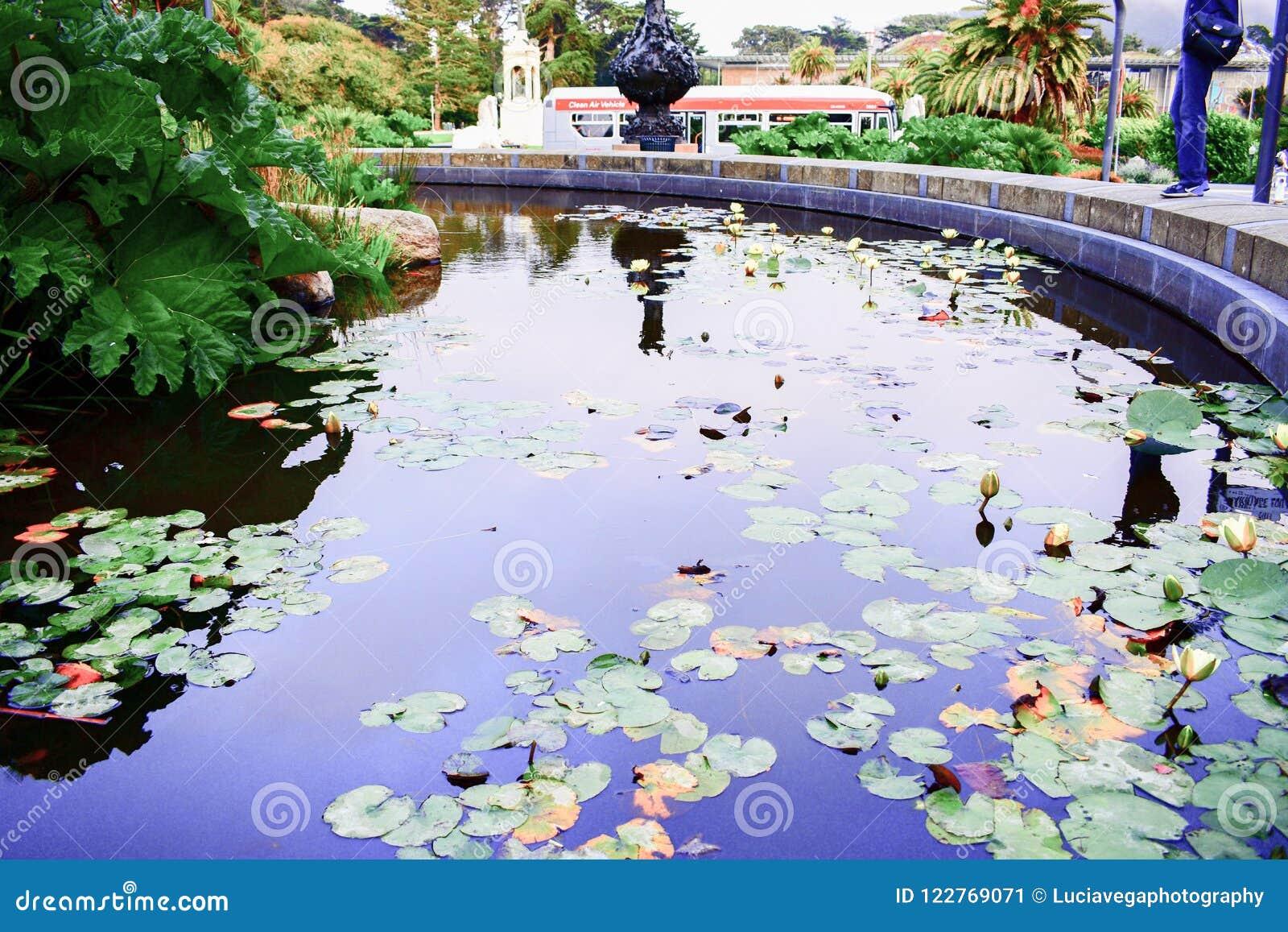 Fountain lotus stock images 853 photos izmirmasajfo