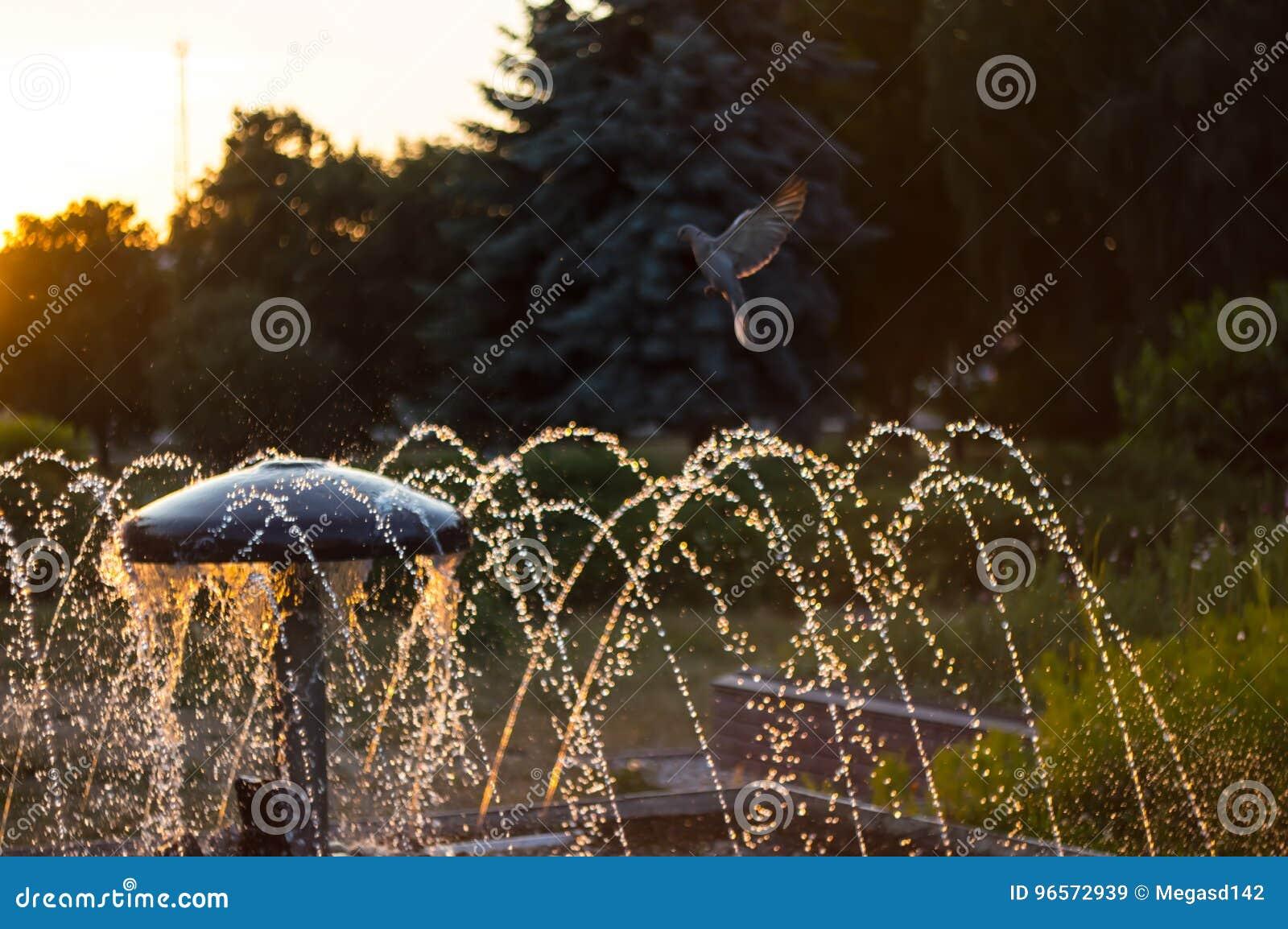 Fountain with turtledove