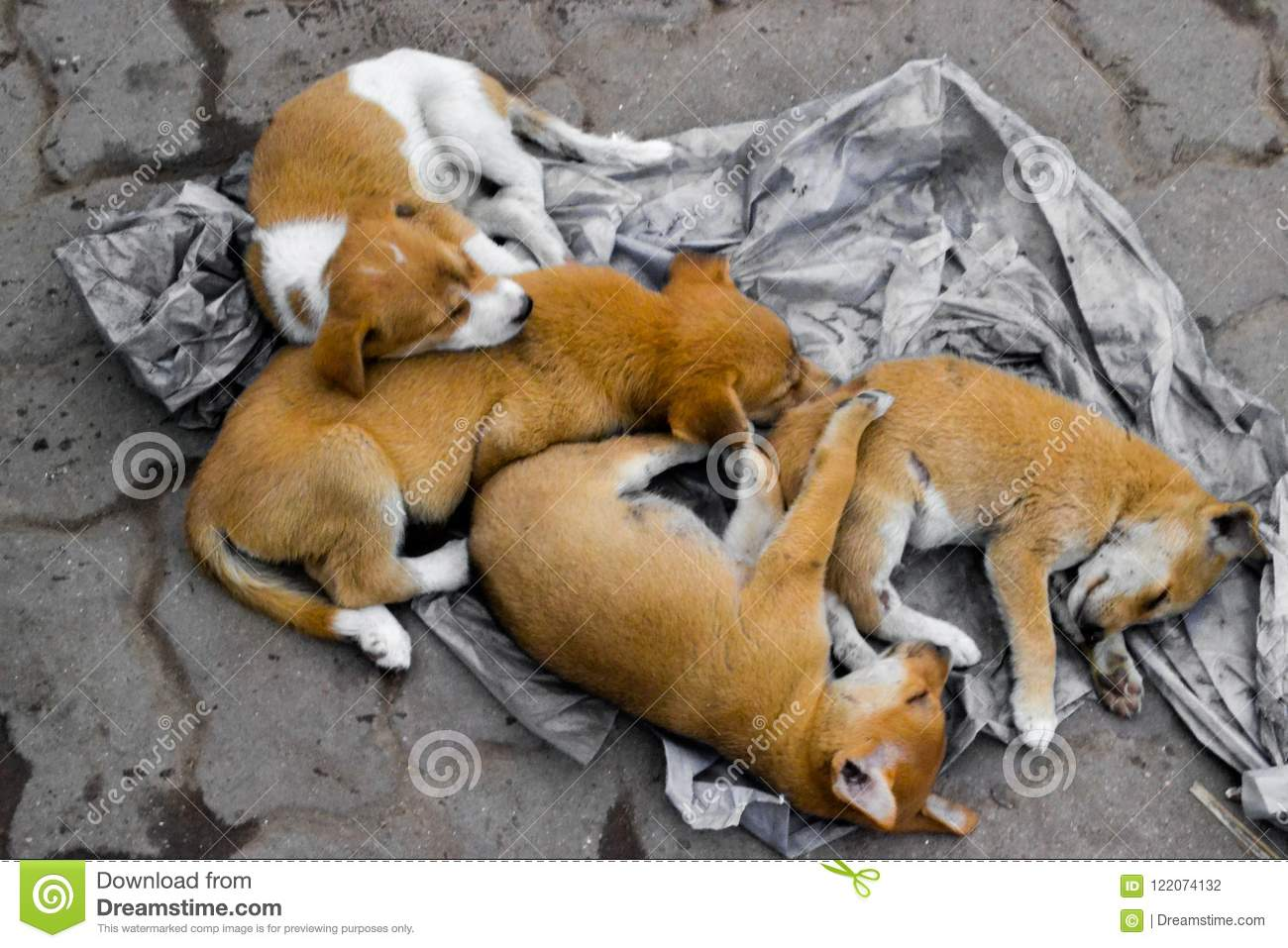 Four abandoned dog siblings