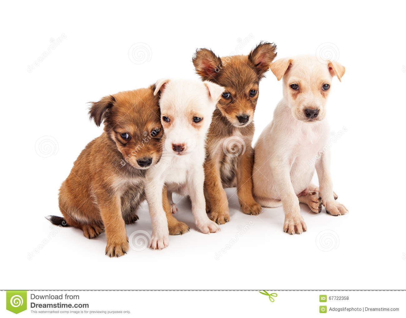Four Cute Puppies To her Stock Image