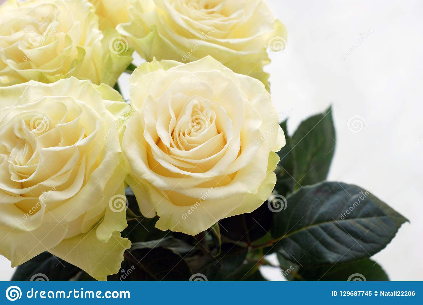 Four beautiful creamy roses in a bouquet close-up.