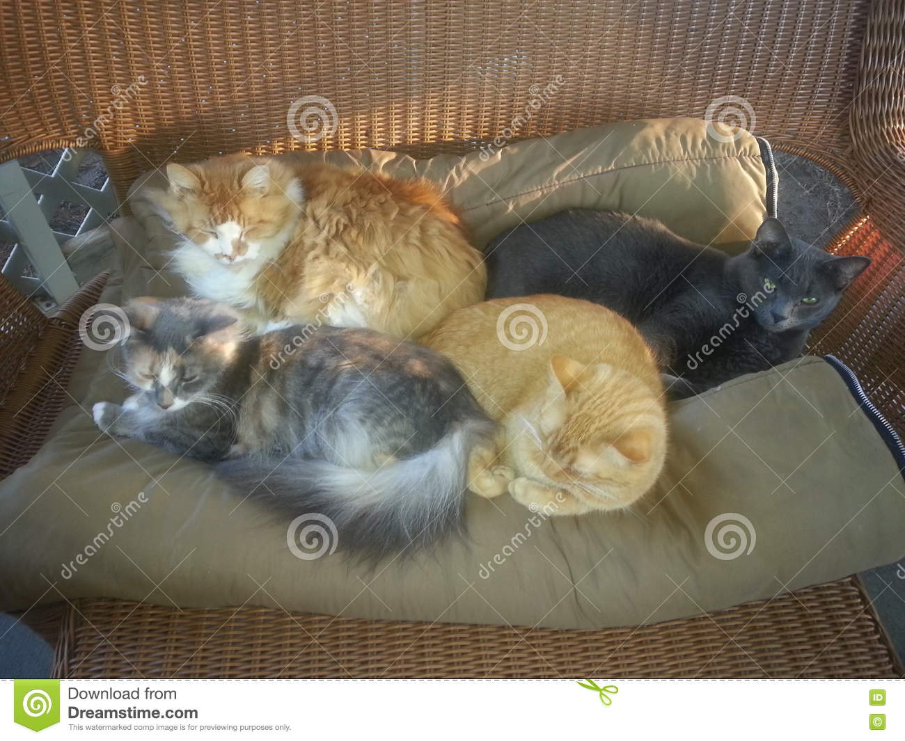 Four Cats Snuggling On Blanket Stock Image - Image of