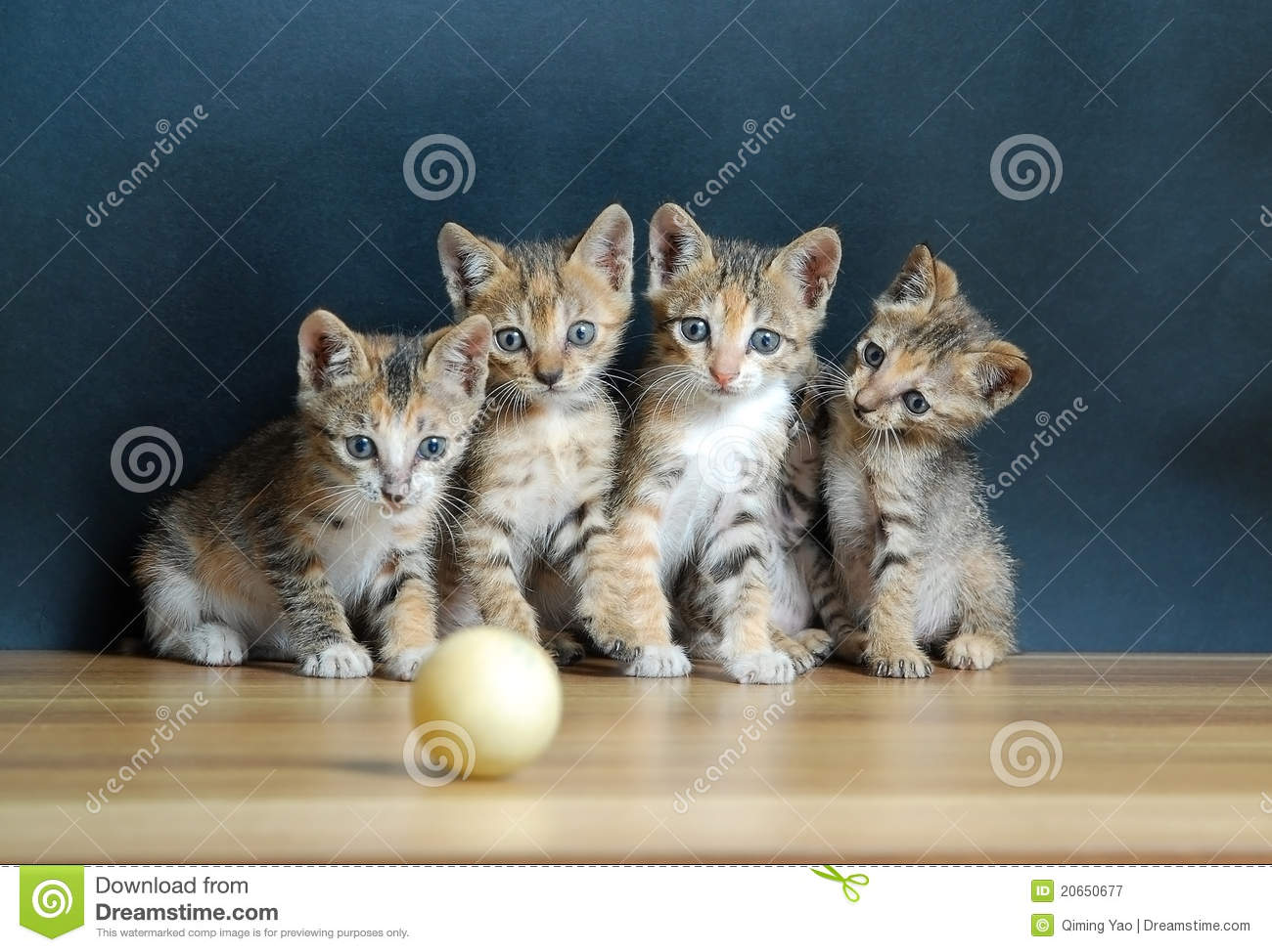 Four cute cats