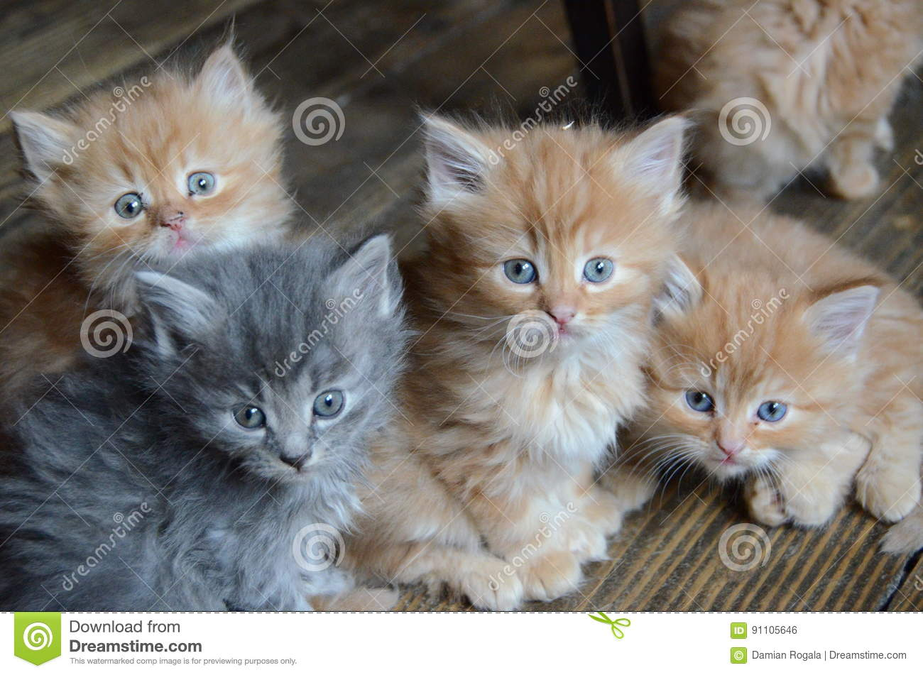 Four cute little kitties stock photo Image of cute kittens