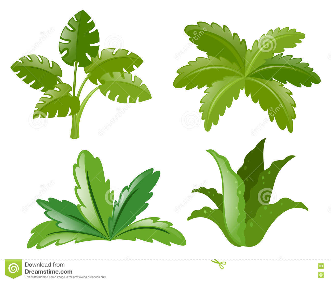 Four different kinds of plants stock vector image 79892184 for Different kinds of plants
