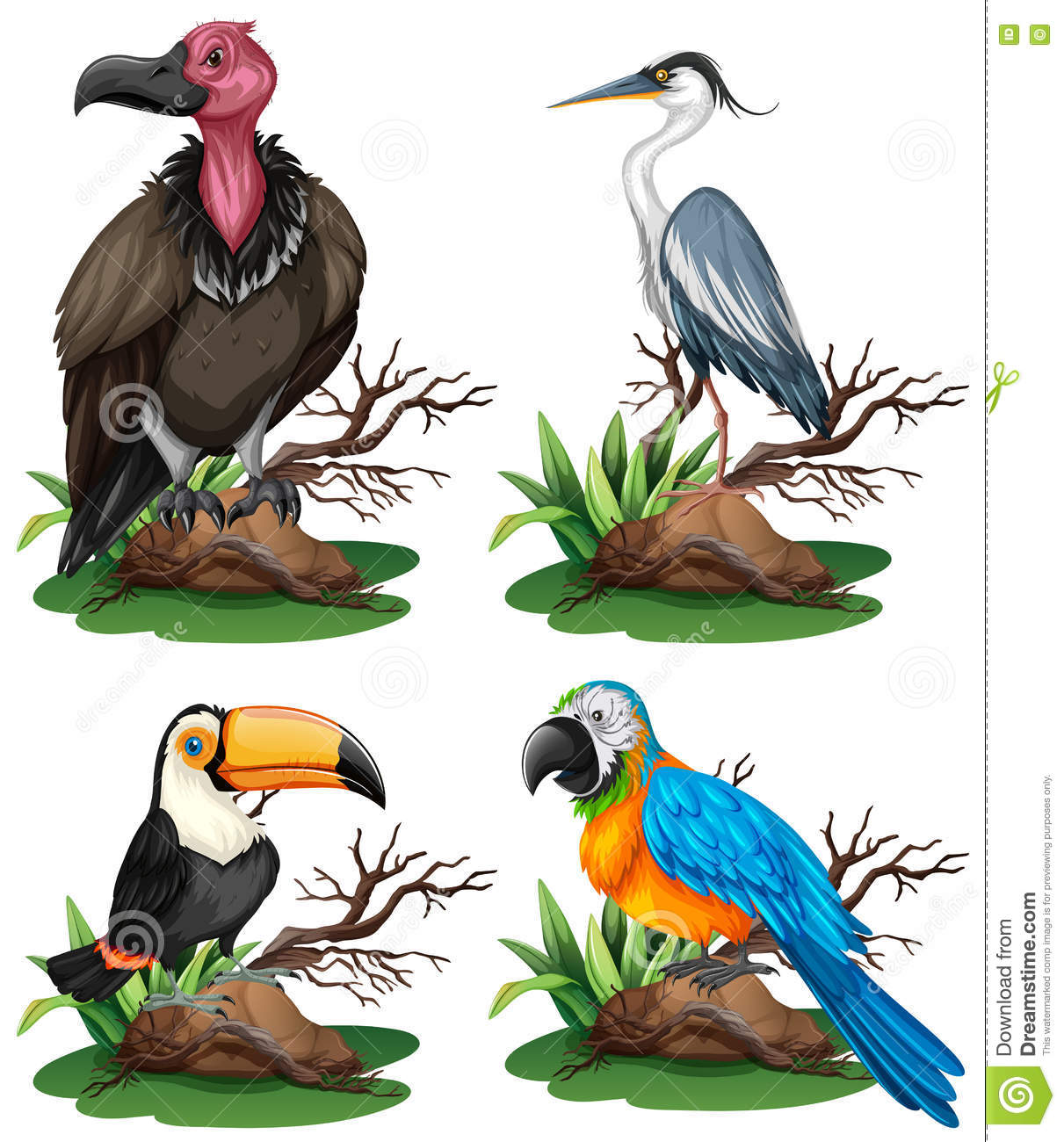 four different kinds of wild birds stock vector image 74582067