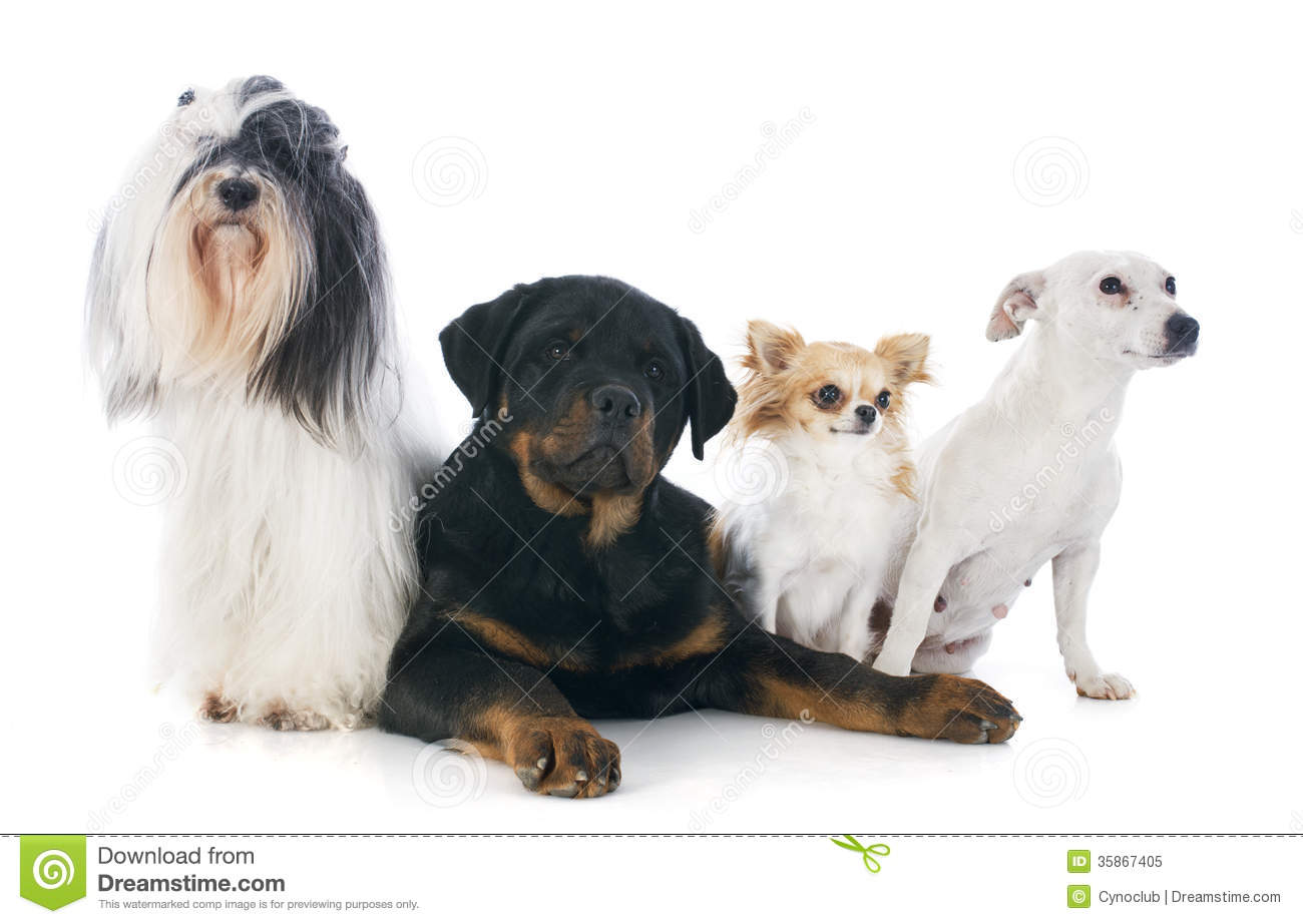 group of dogs clipart