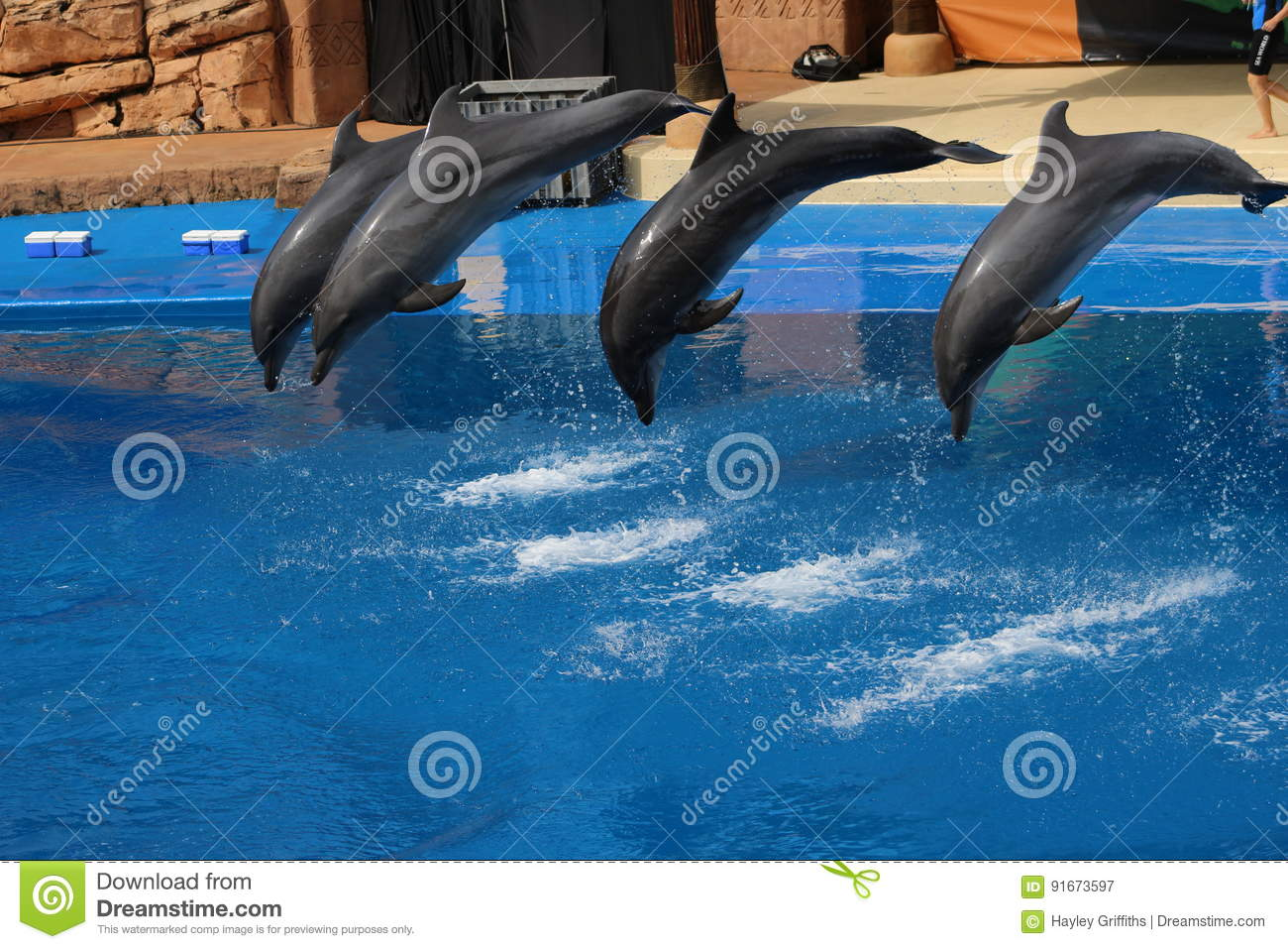Four dolphins jumping in a pool