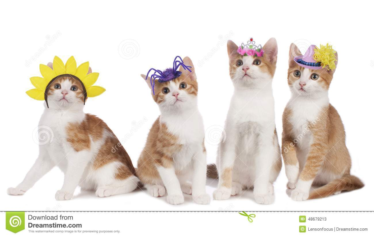 Four funny cats with carnival hats