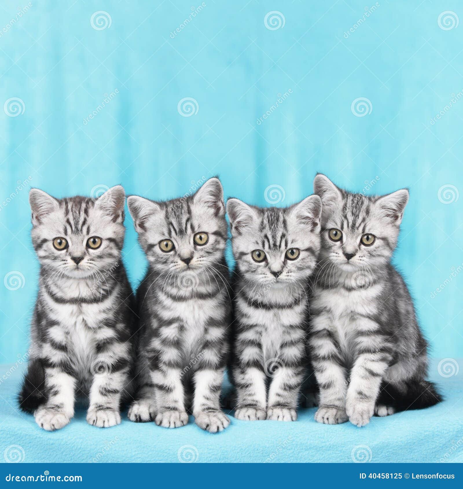 Four kitten in a row stock image. Image of kitten, tabby ...