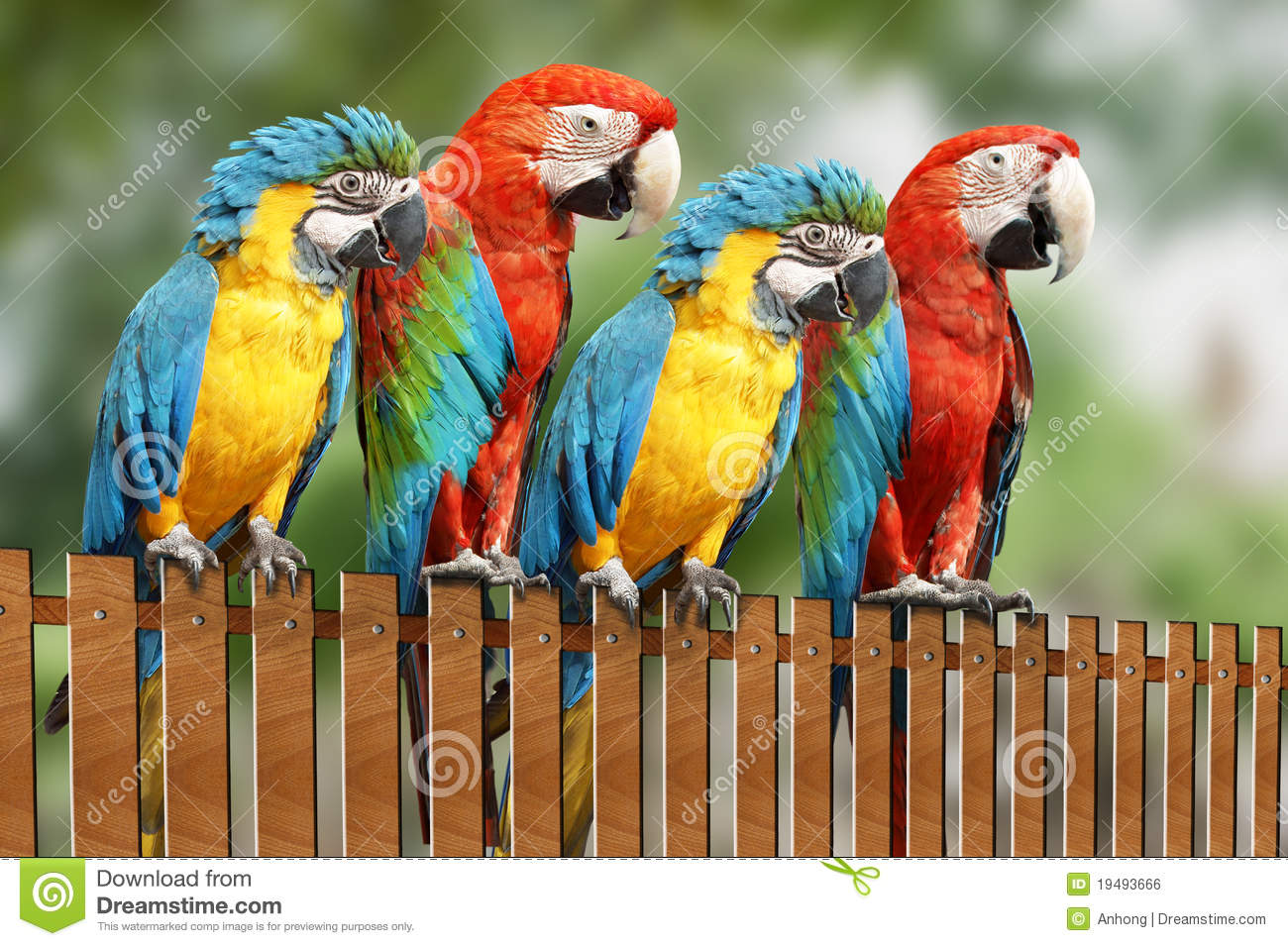 Four Large Parrot Royalty Free Stock Image - Image: 19493666