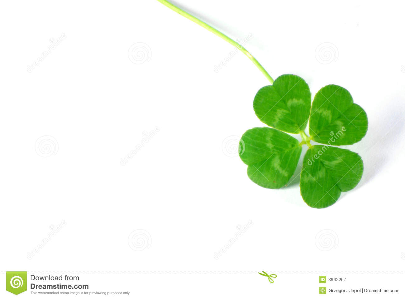 four leaf clover royalty free stock photography image 3942207