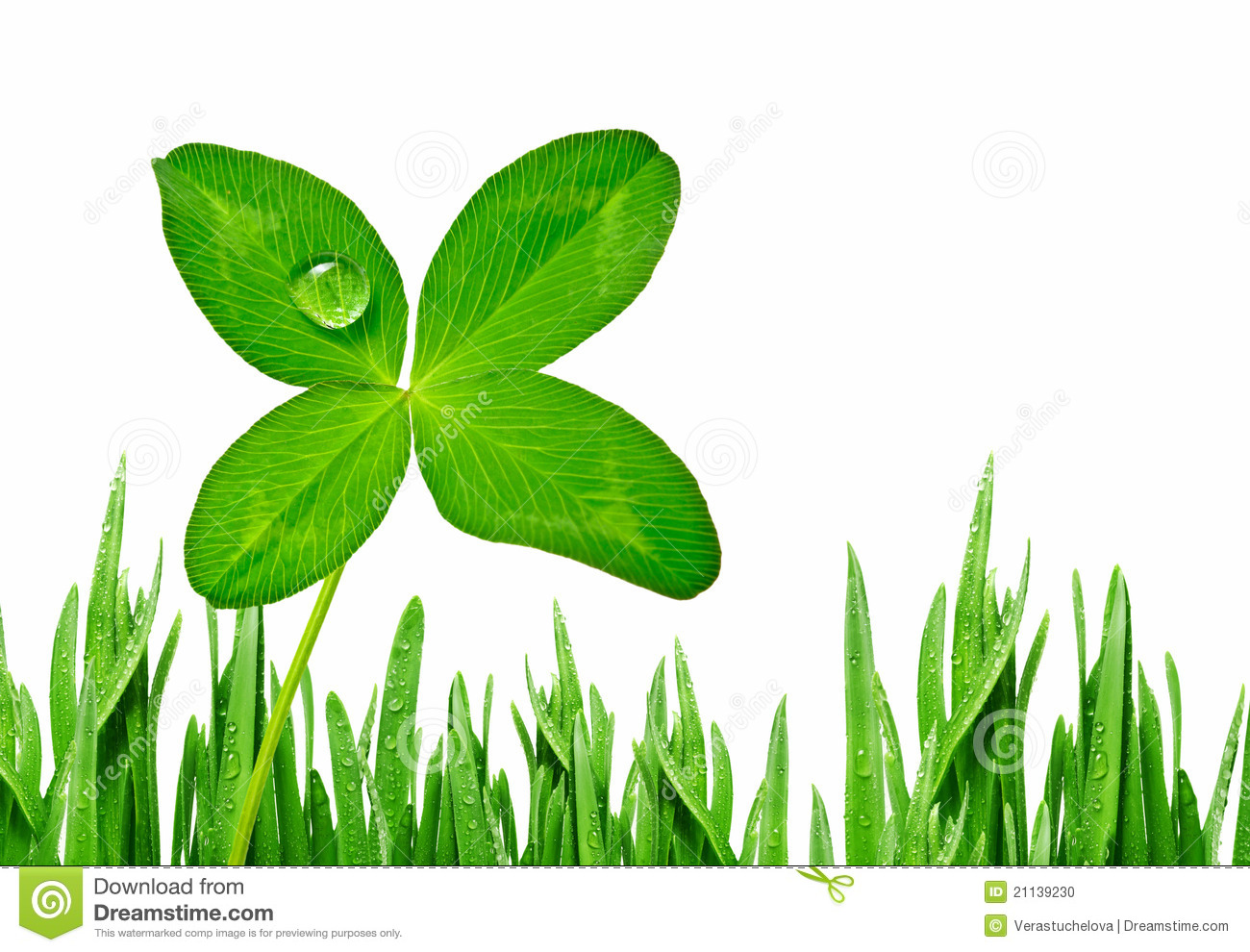 Four Leaf Clover And Grass Border Isolated On White Stock Photo