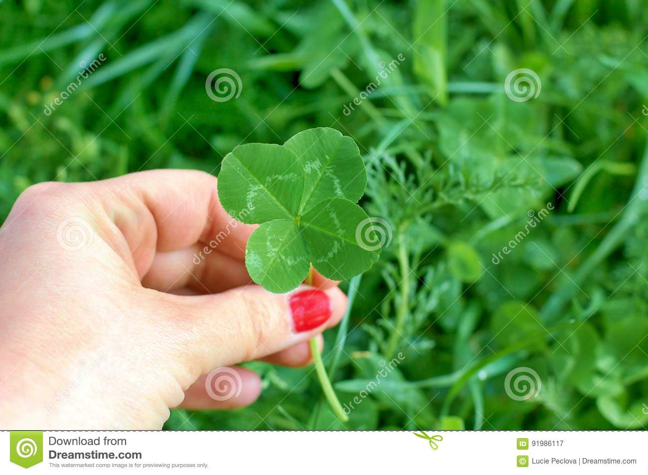 Four leaf clover in womens hand, symbol of good luck