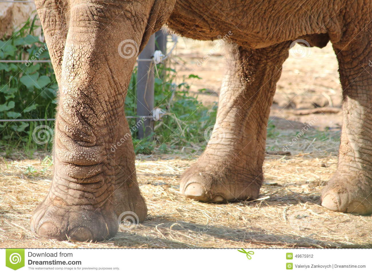 Four Legs Of African Elephant Stock Photo Image 49675912