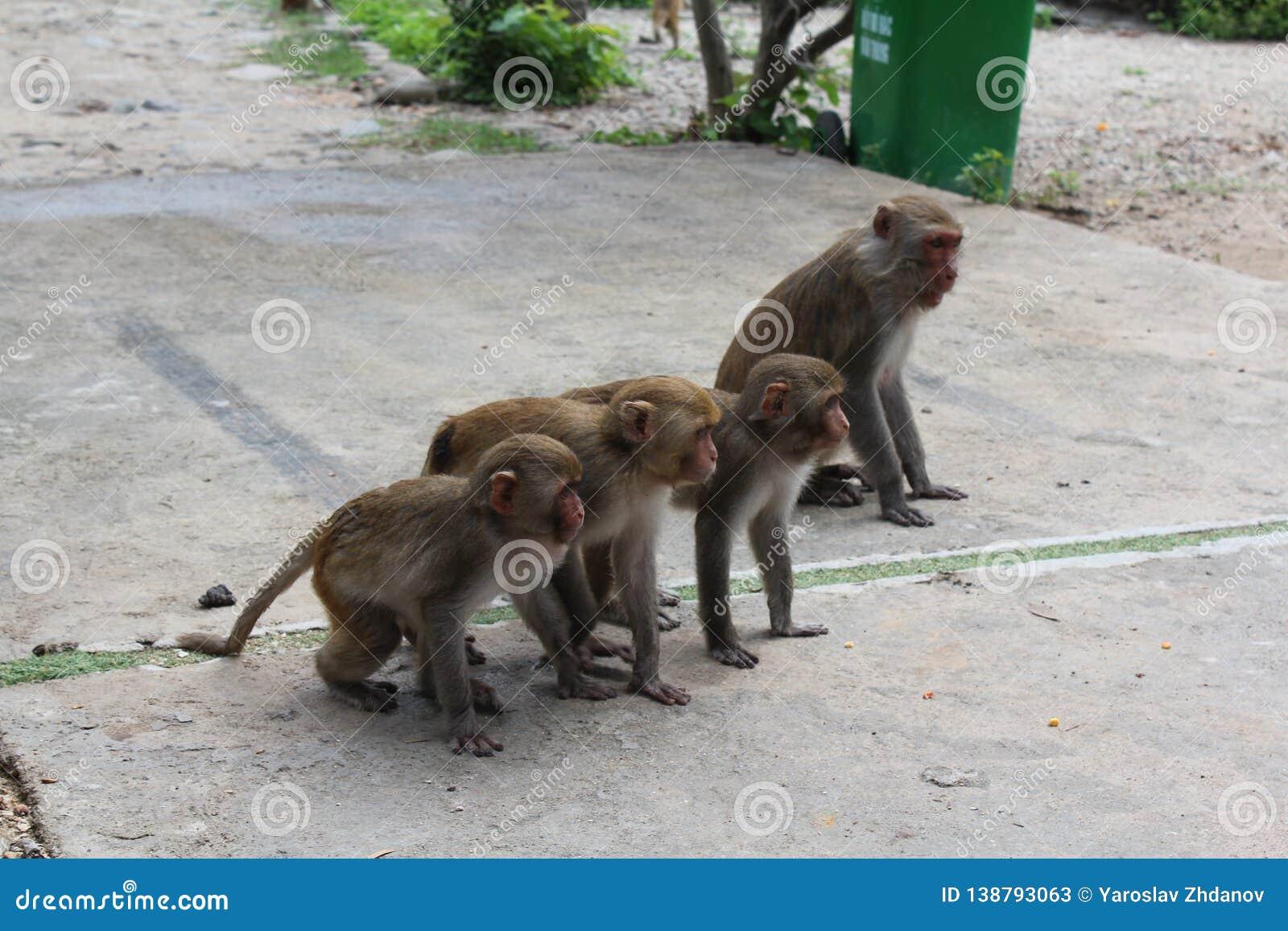 Cute baby monkeys in a row on monkey island