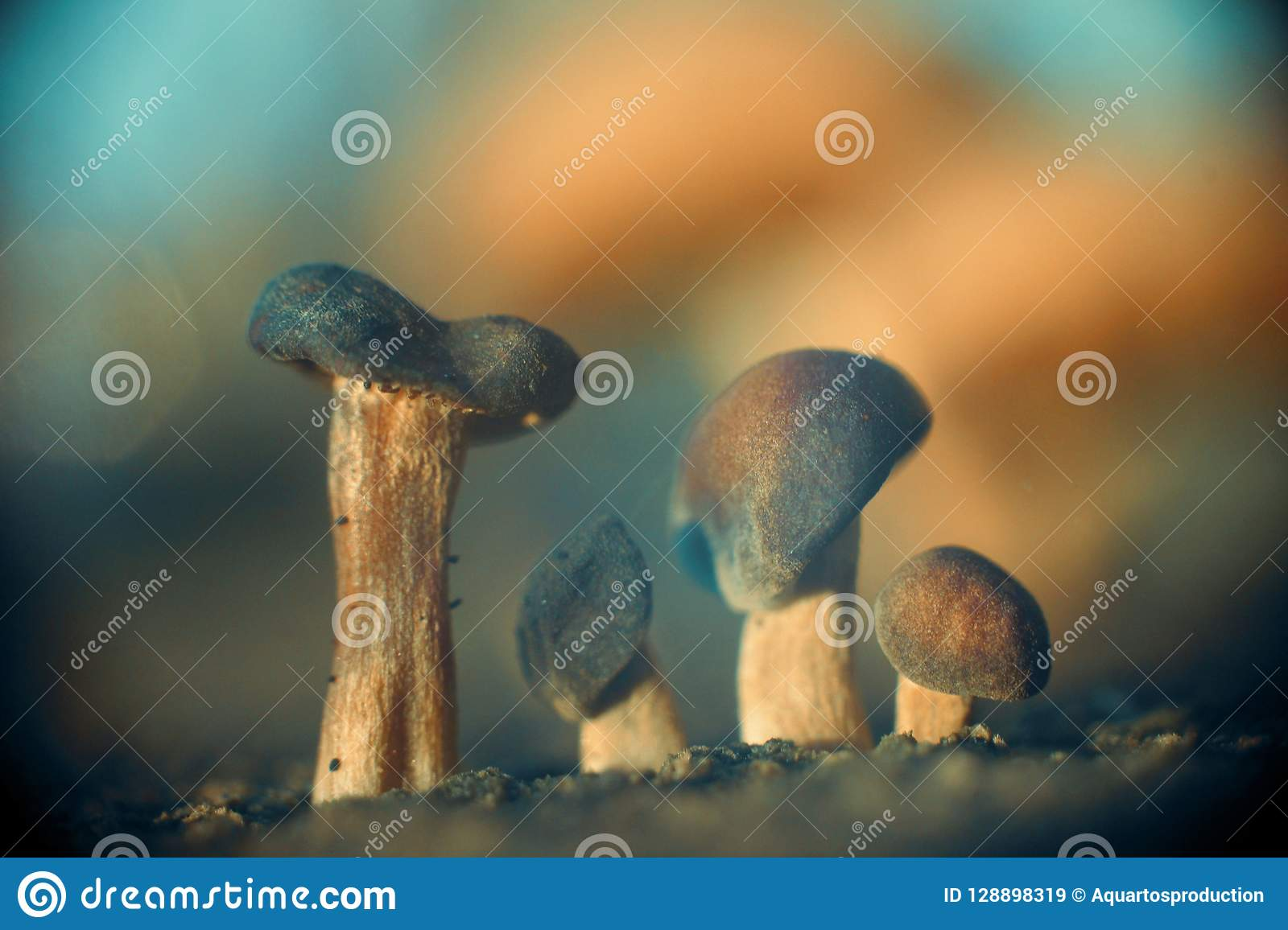 Four Mushroom Brothers Abstract Nature Background