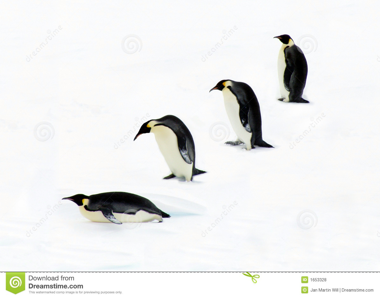 evolution of penguins Evolution of the emperor penguin by alyssa weick period 6 the emperor penguin, or aptenodytes forsteri, lives in the freezing waters and fast ice of antarctica and is the only penguin to breed in the antarctic during the winter.