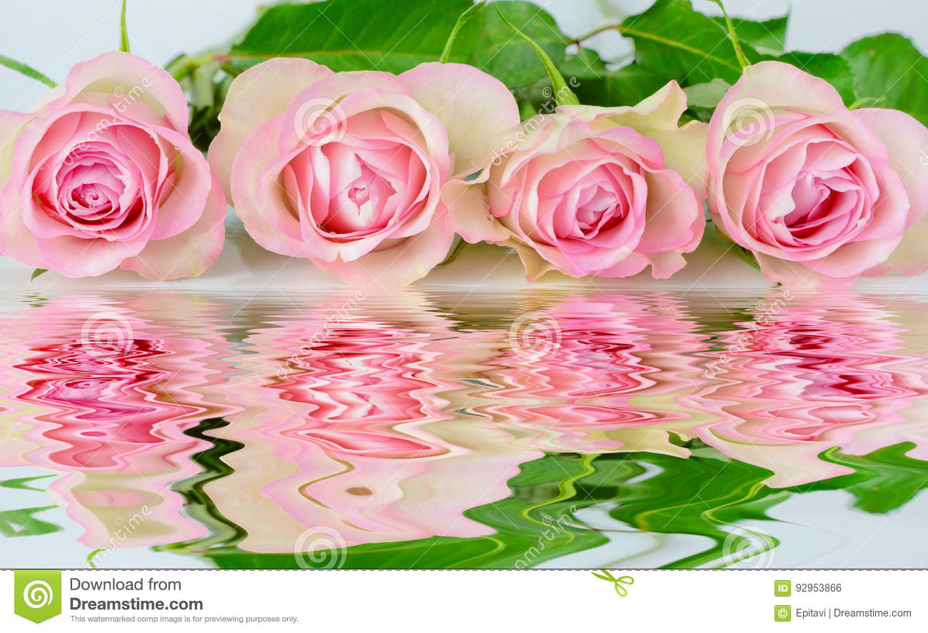 Four pink roses