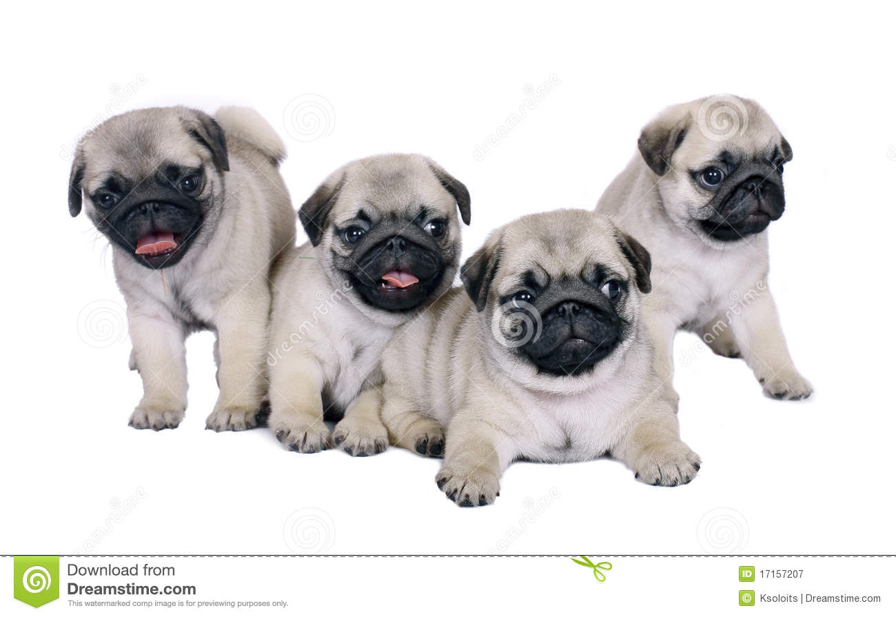 Four puppies.