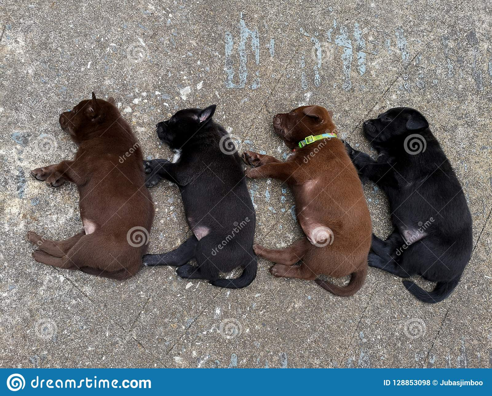 The four puppy lying on cement floor.