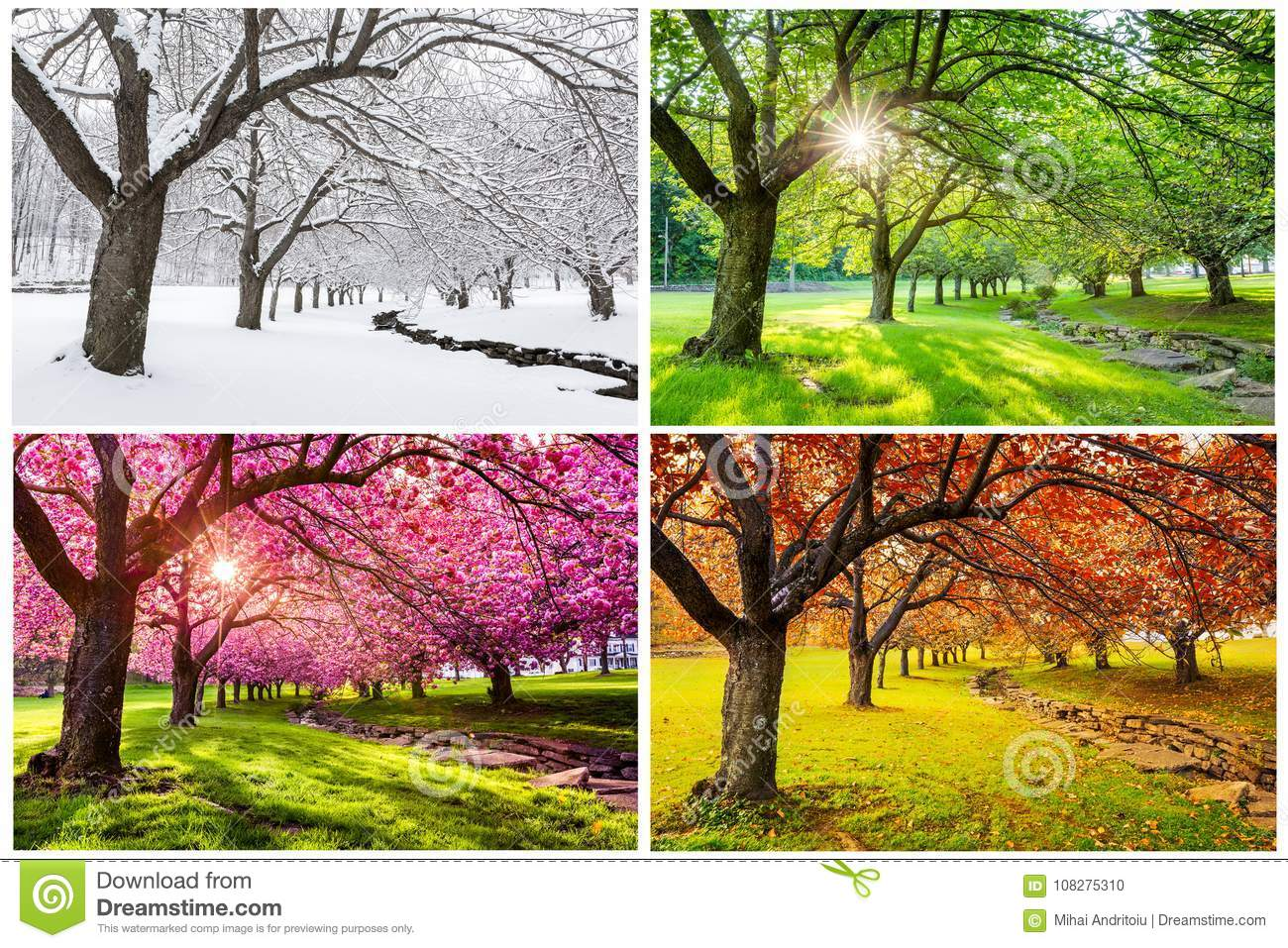 Four seasons with japanese cherry trees