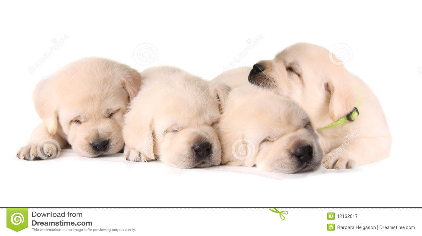 Four sleeping puppies