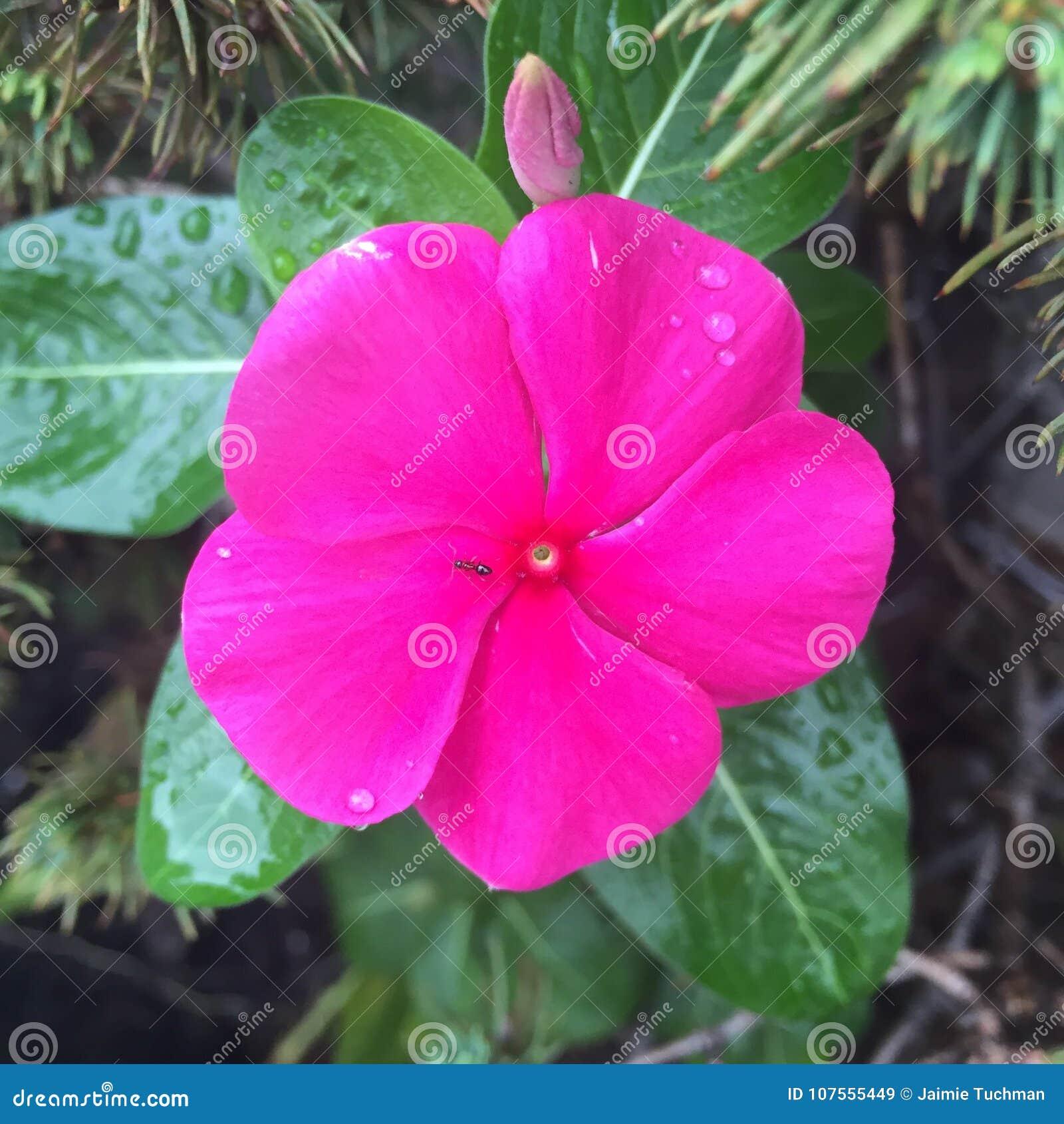 Fourmi sur la fleur