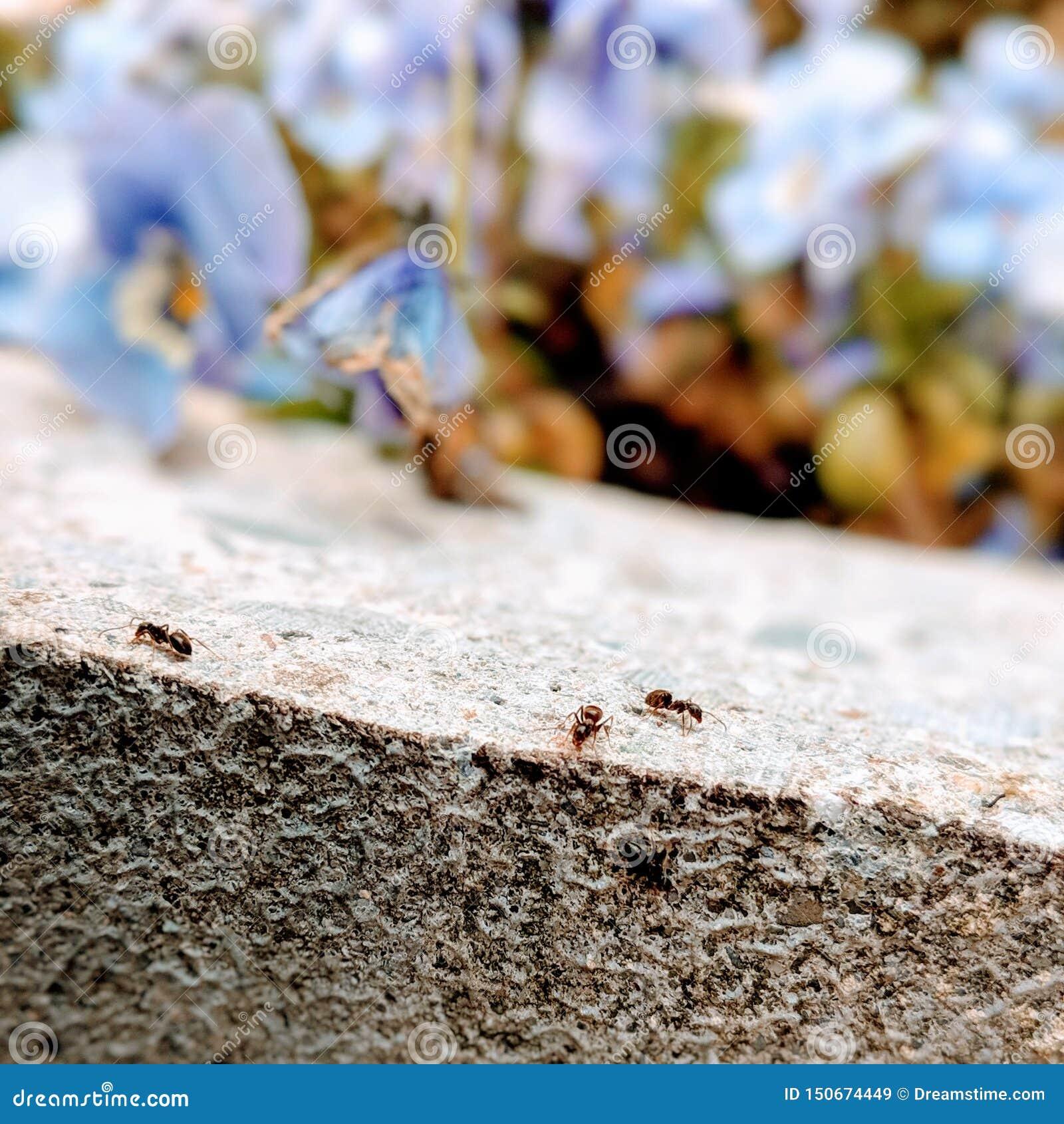 Fourmis dures au travail avec des fleurs