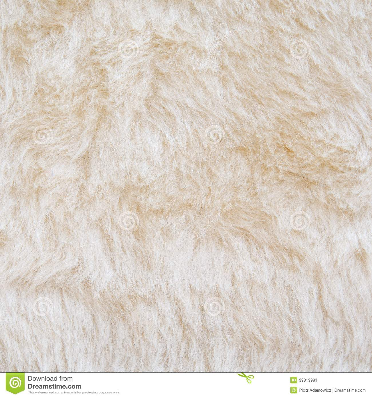 Fourrure Blanche De Texture D Ours Blanc Photo Stock