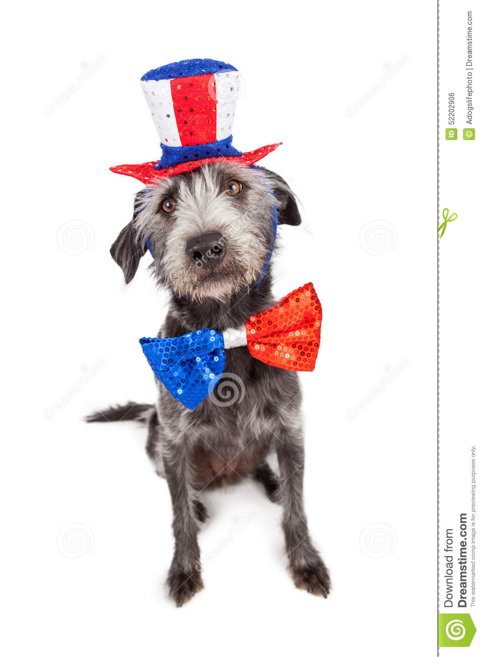 Fourth of july terrier dog stock photo image 52202906 for Dog day sitting