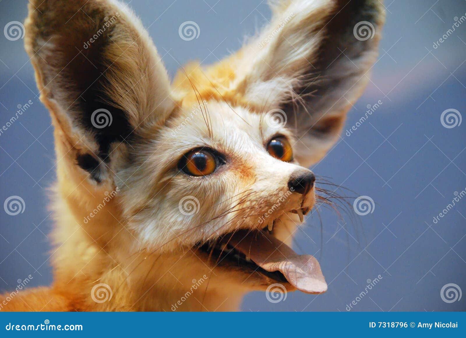 Fox di Fennec