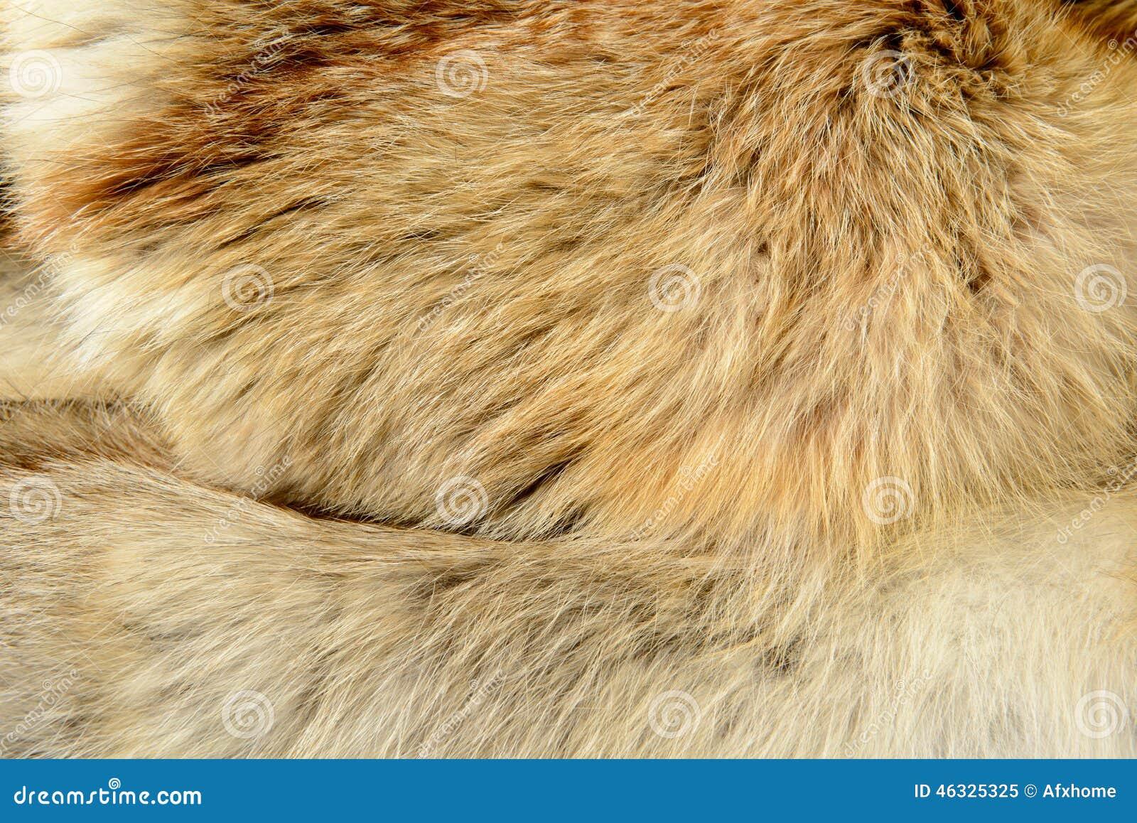 texture fur animal background - photo #15