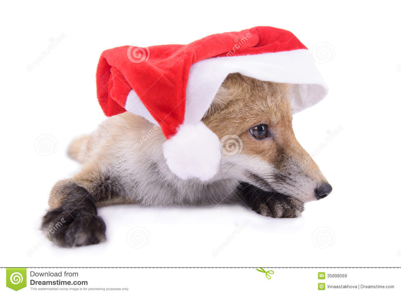 Red Fox Christmas Royalty Free Stock Photography - Image: 35898457