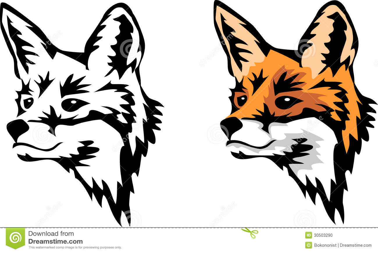 Head of red fox - color  Fox Head Illustration
