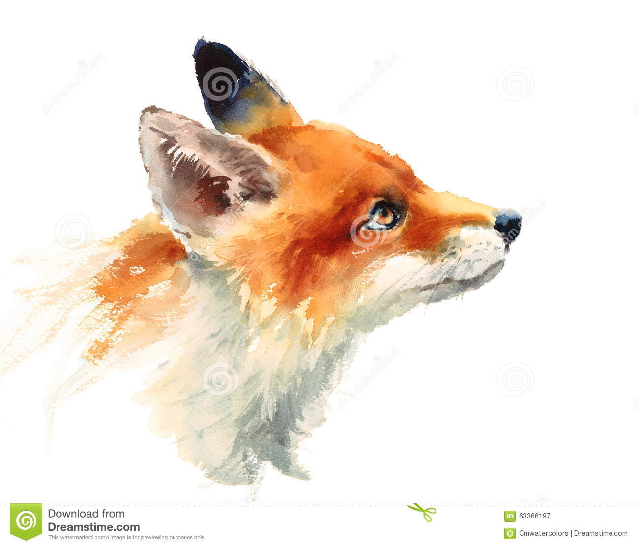 Fox Looking Up Watercolor Animals Illustration Hand Painted Stock Image 63366197