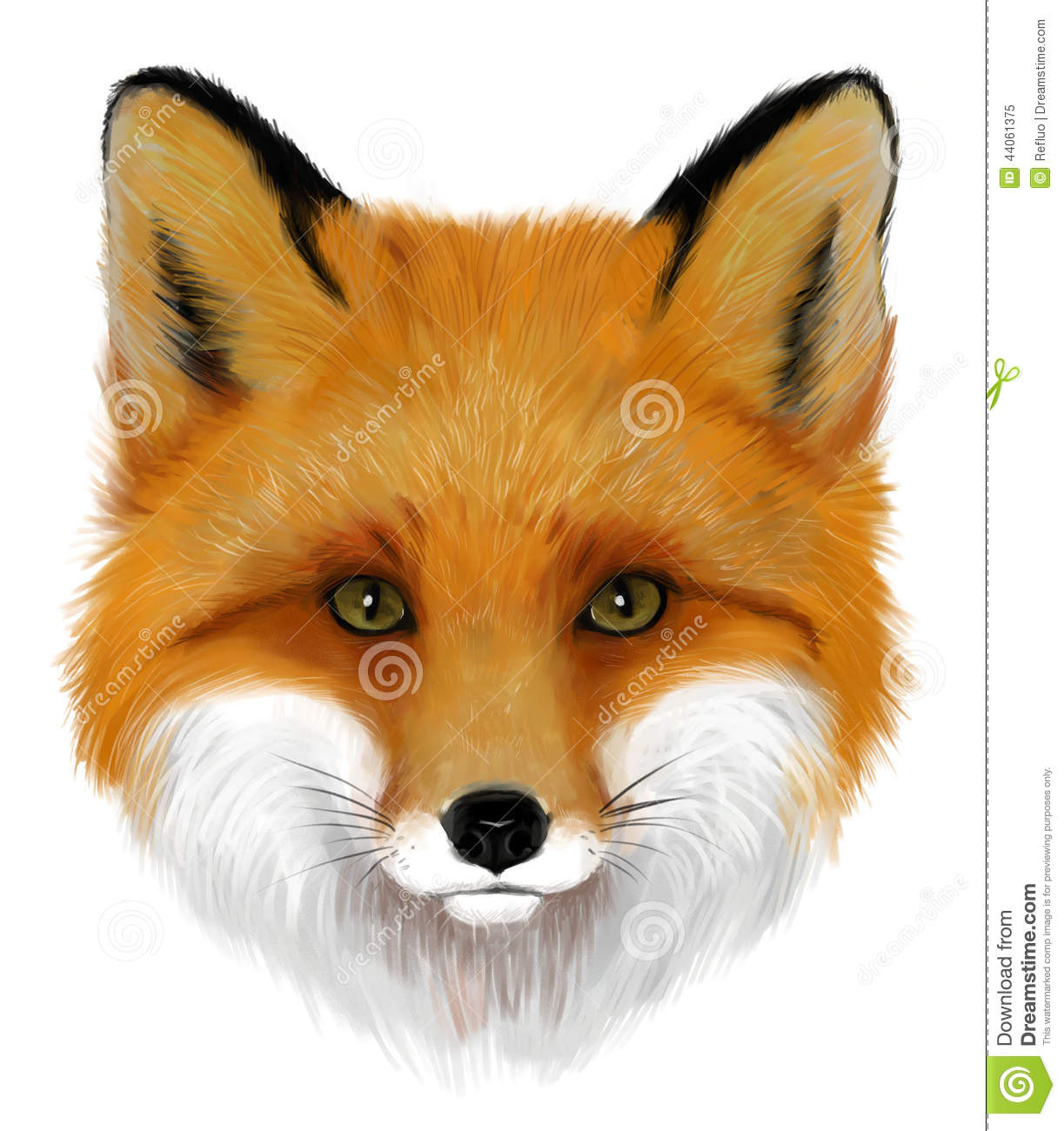 Portrait of realistic orange fox on the white background.