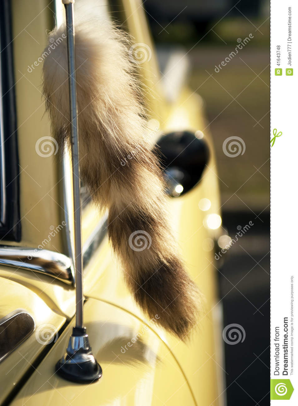Fox tail on vintage car stock photo  Image of transport