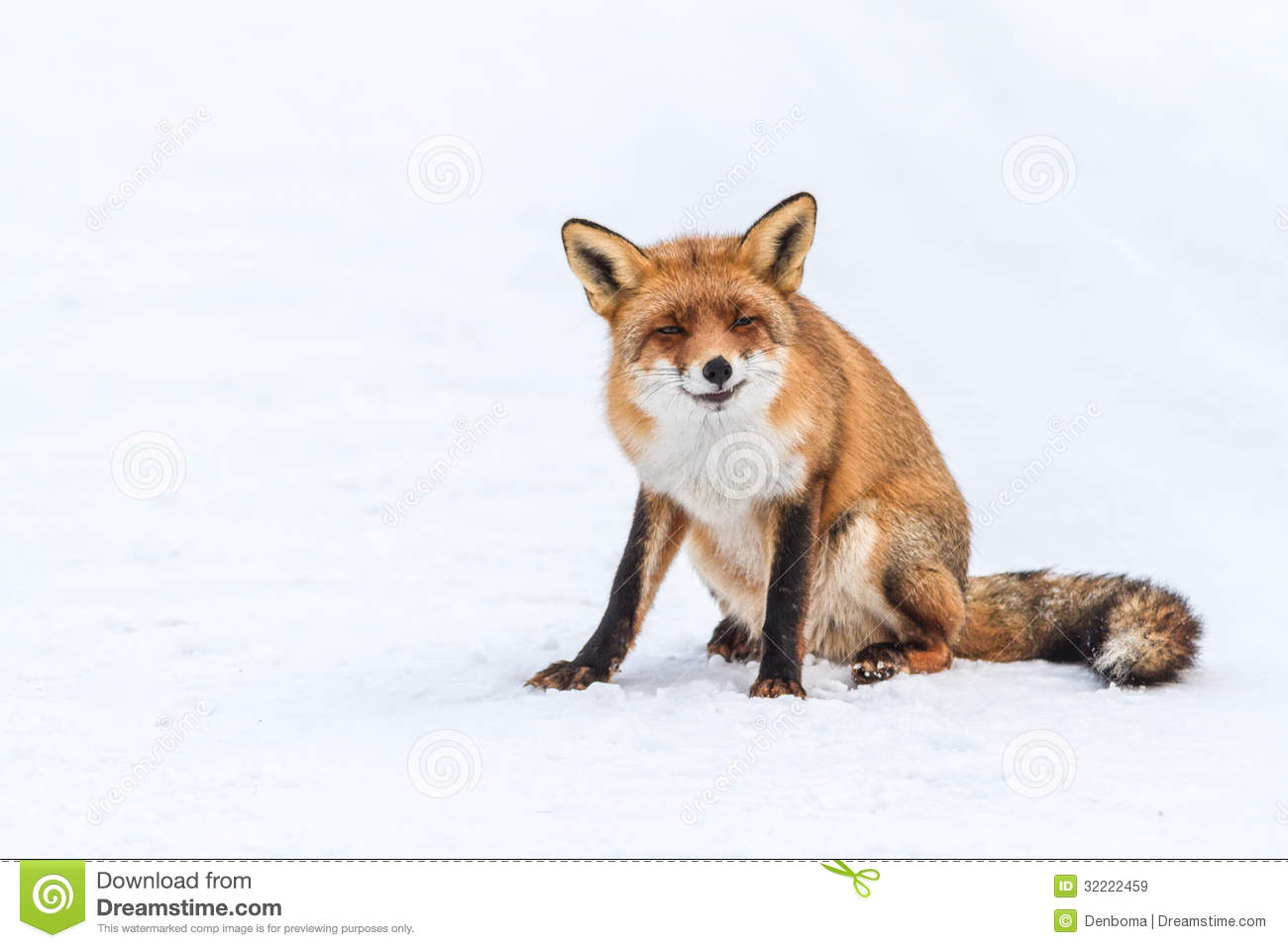 Foxes On Watch Royalty Free Stock Images - Image: 32222459