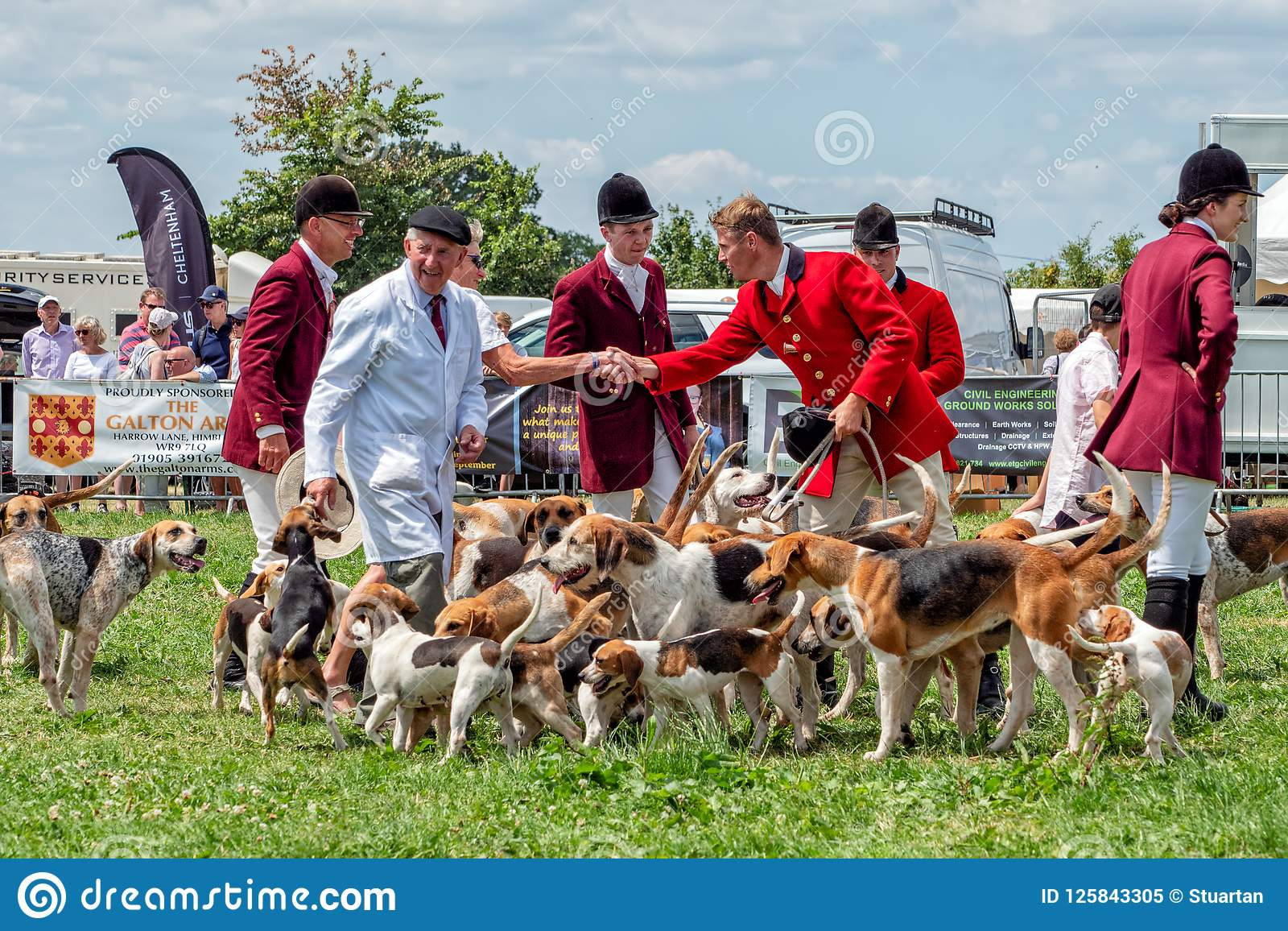 Foxhounds i Beagles przy Hanbury wsi przedstawieniem, Worcestershire, Anglia