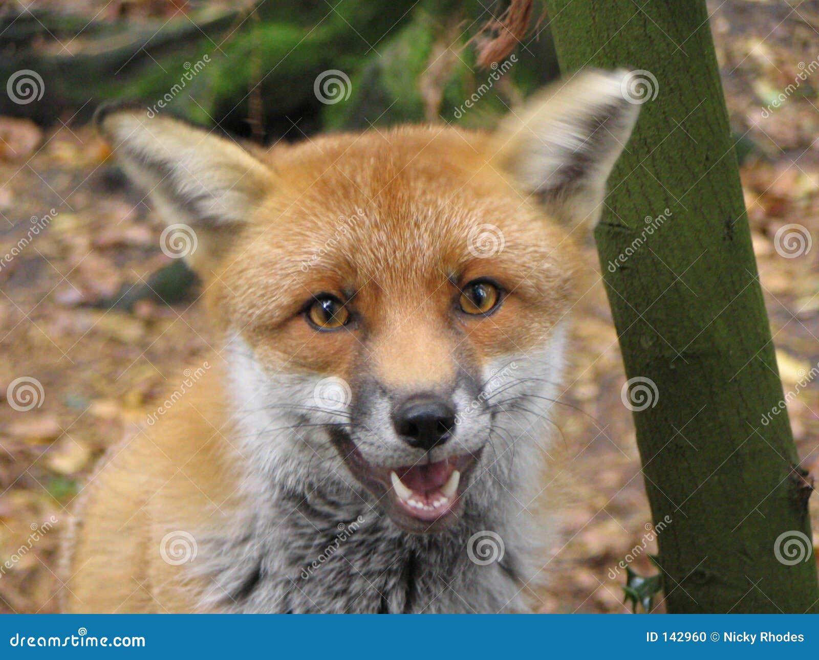 Foxy Gesicht
