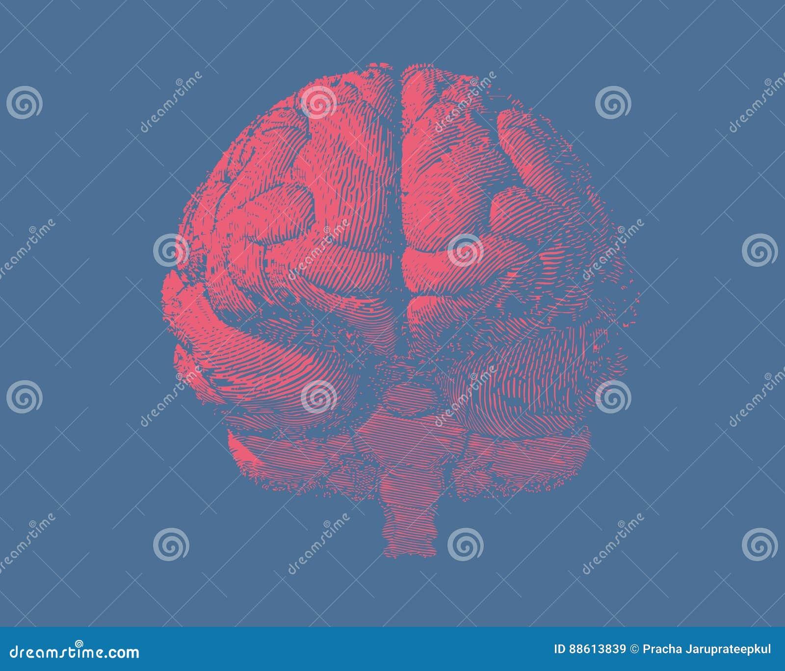 Främst sikt för gravyrhjärnillustration på blått BG