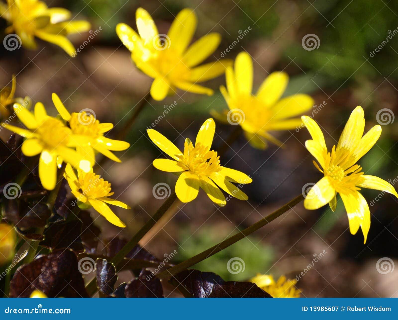 Blaue Blumen Im Fruhjahr Stockbild Bild Von Blau Vibrant 41703217