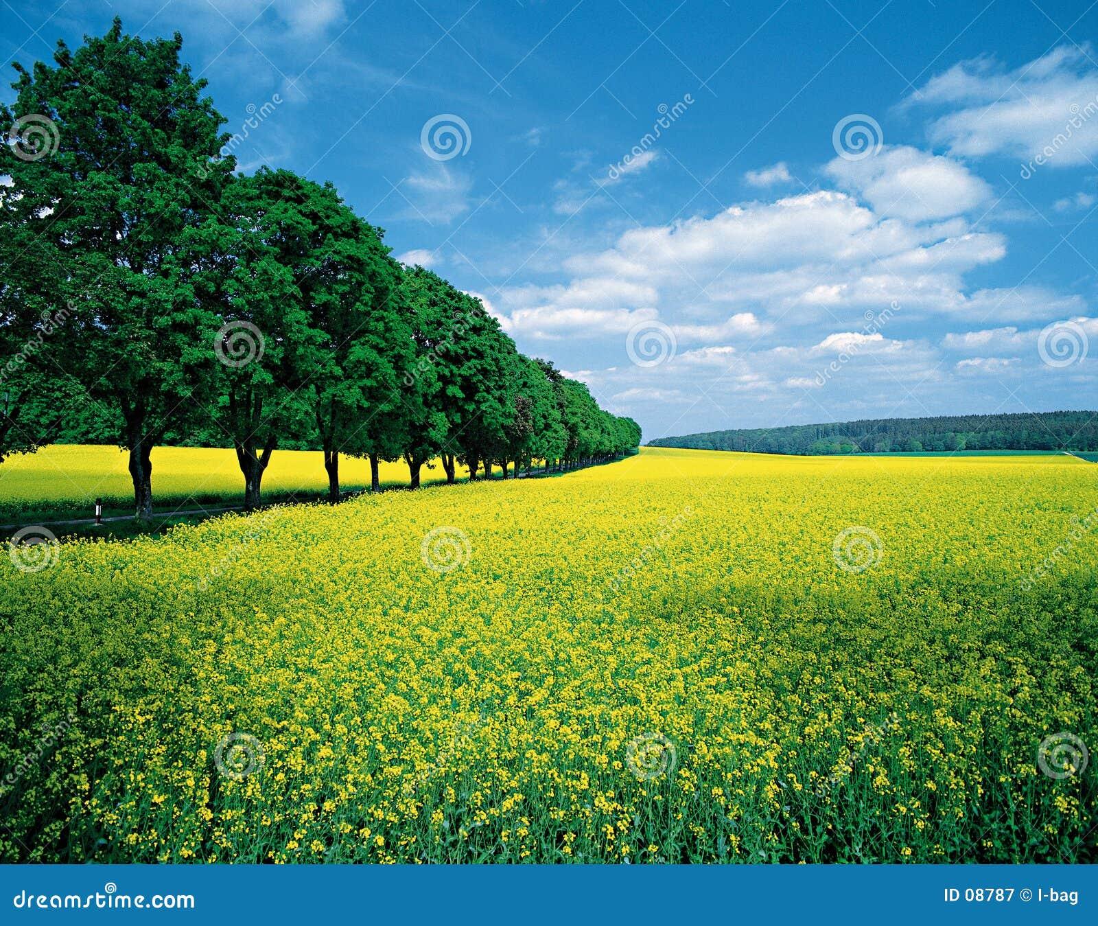 Frühling Felder u. allee