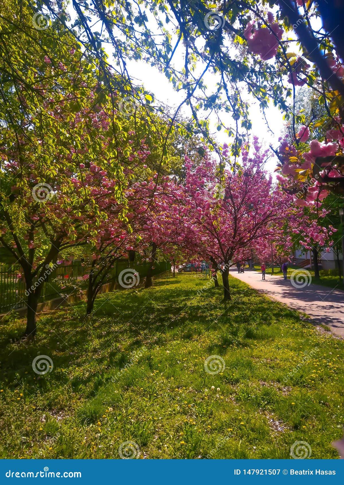 Frühling ist die beste Jahreszeit im Jahr