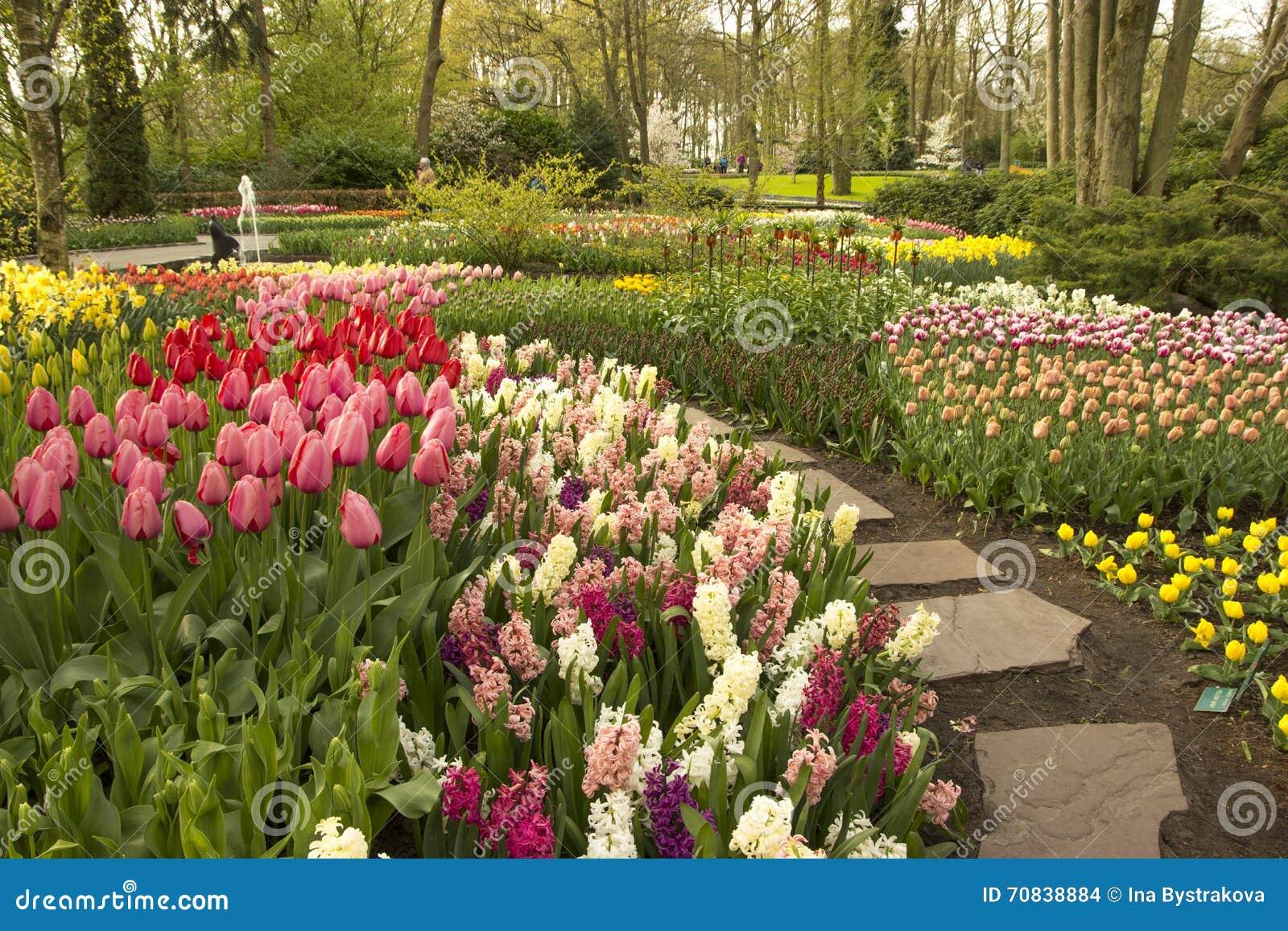 Frühlings-Blumen in Keukenhof-Garten, die Niederlande