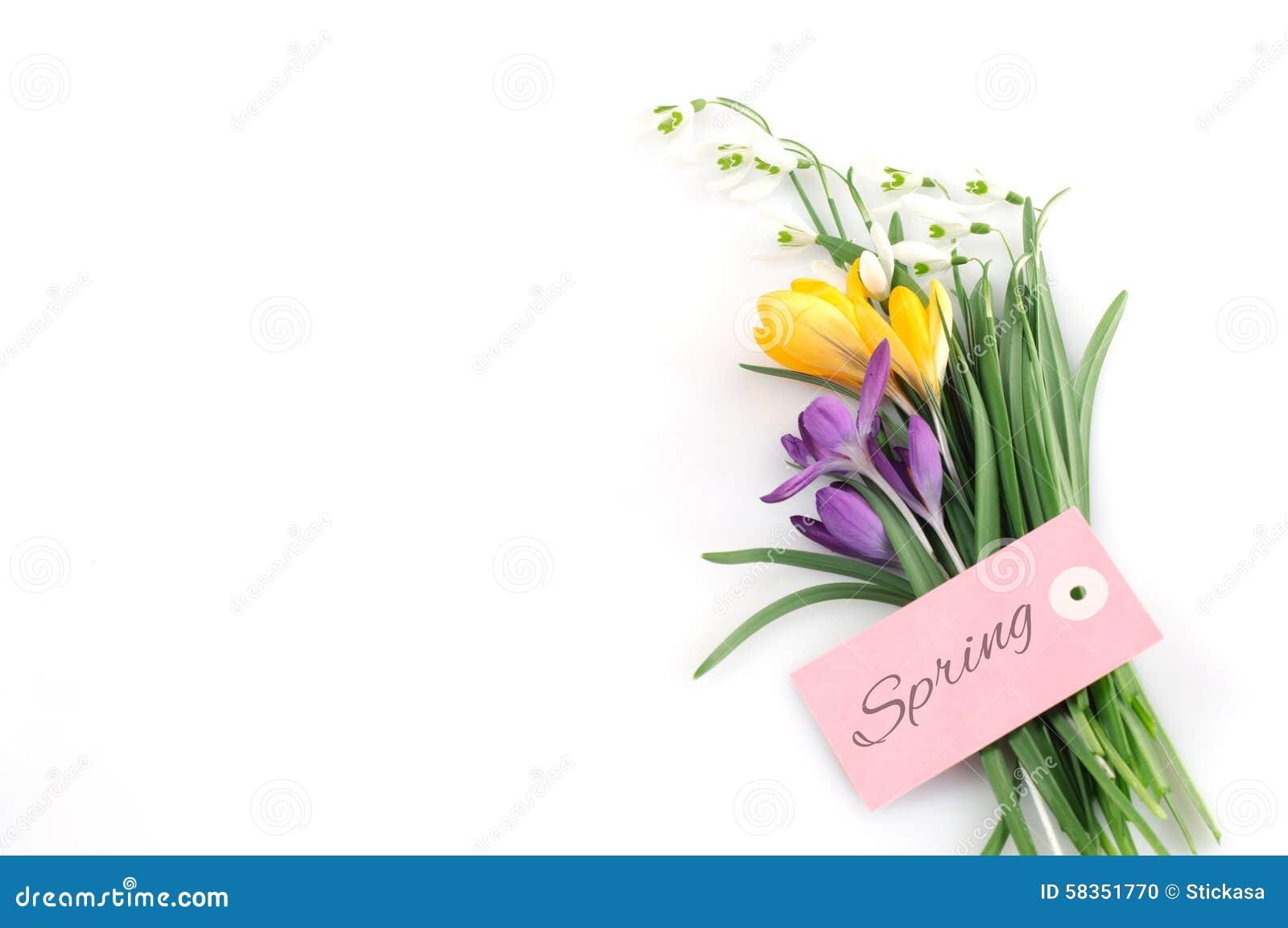 Frühlings-Blumen und Gruß-Karte
