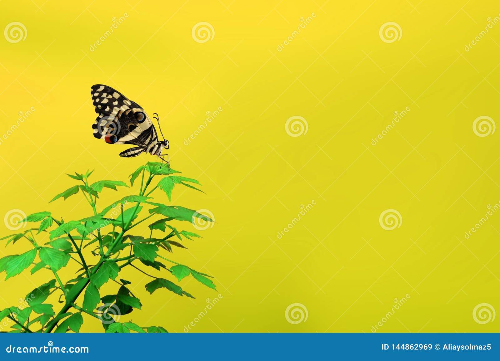 Frühlings-Zeit-Konzept, schöner Schmetterling und leerer Bereich für den Text
