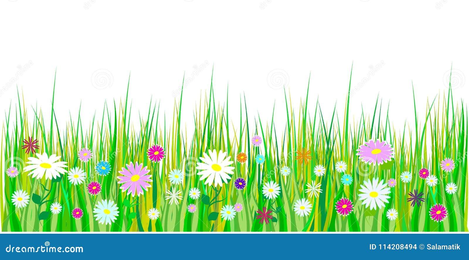 Frühlingsgras und Blumengrenzen Ostern-Dekoration mit Frühlingsgras und -wiese blüht Getrennt auf weißem Hintergrund Vektor